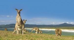Australien Camper